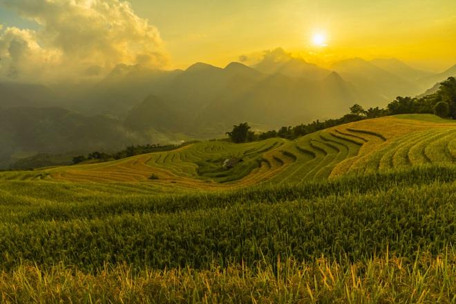 Cảnh đẹp say mê mùa vàng Sa Pa
